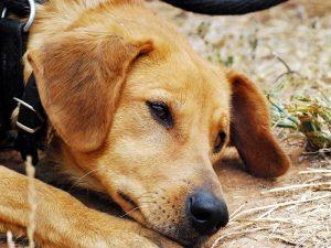 Бывает ли у животных осенняя депрессия