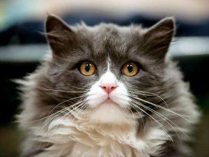 Коту усы не для красы!