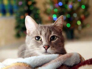 Новогодний стол - гроза для желудка животных