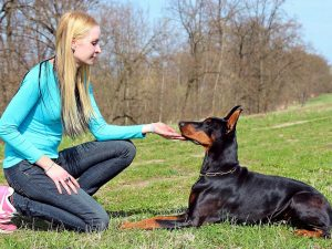 Как правильно познакомиться с чужой собакой