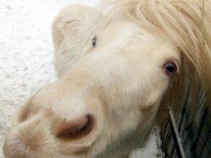 Розовая лошадь с голубыми глазами - это не глюк!