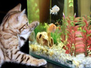 Балерины за стеклом аквариума
