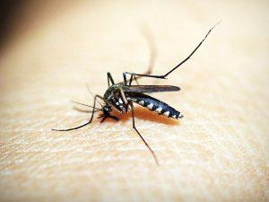 Что делать с укусами насекомых