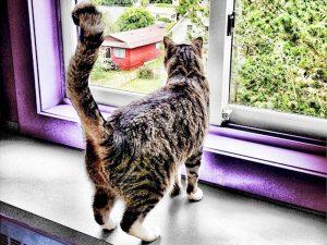 Пластиковые окна смертельно опасны для кошек
