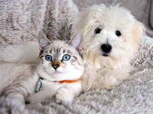 Как кошка с собакой - душа в душу!