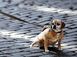 Чипирование животных: зачем это надо?