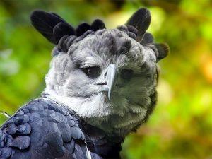 Гарпия - демоническая птица
