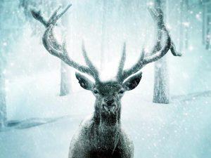 """""""Проскакал по городу олень..."""" Животные идут к нам"""