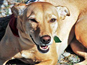 Почему пес ищет несуществующих блох