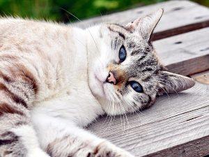 Почему все так любят котиков?